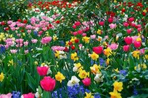 campo-flores-varias-cores