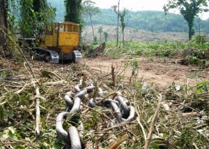 o-inicio-do-desmatamento-ate-chegar-aos-dias-atuais-1