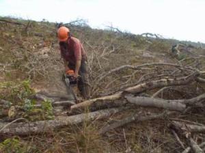 Desmatamento-_-mp-go-gov-br