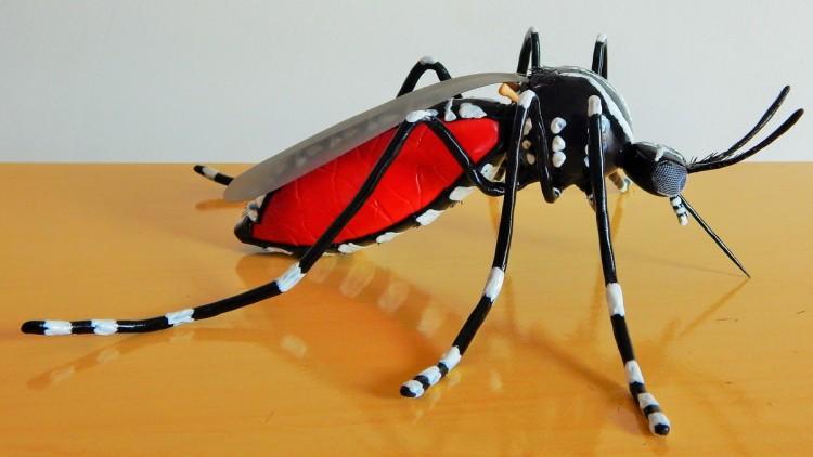 modelo-didatico-mosquito-da-dengue-modelo-didatico