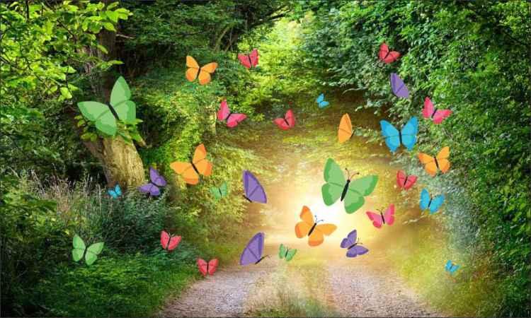 borboletas 7